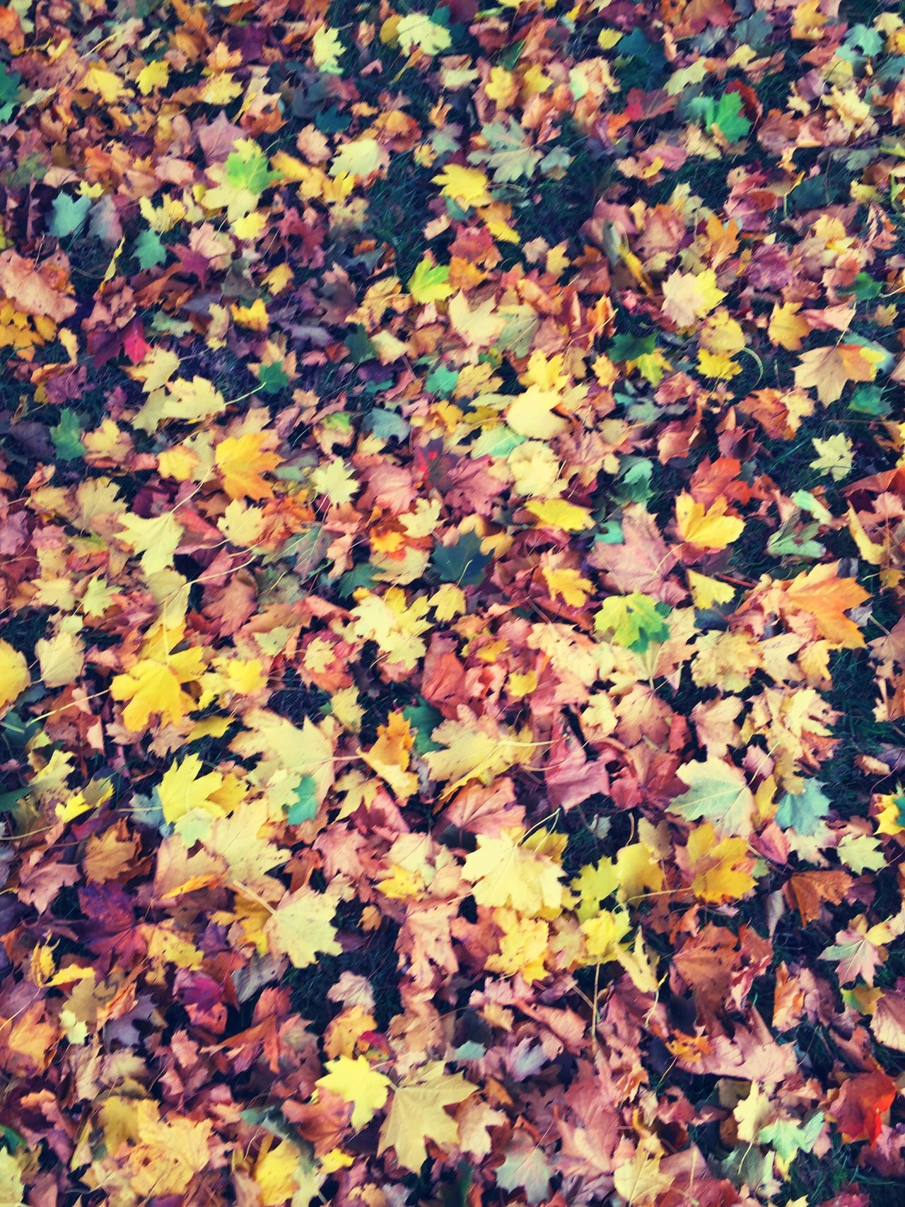 Nature Nature_collection Leaves Leaf Autumn Autumn Colors Autumn Leaves