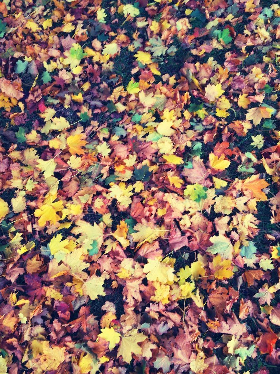 Nature Nature_collection Leaves Leaf Autumn Autumn Colors Autumn Leaves