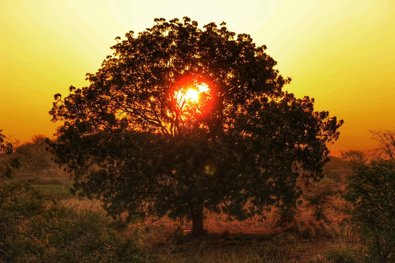 Tree of life Sunset Sun Tree Beauty In Nature No People Nature Outdoors Sky Day Beauty In Nature Landscape Summer Memories 🌄 Eye Em Best Shots -Landscapes Incredible India Mountain Landscape Eyeem India Tranquility Eyemnaturelover Melancholic Landscapes Eyem Best Shots Nature_collection