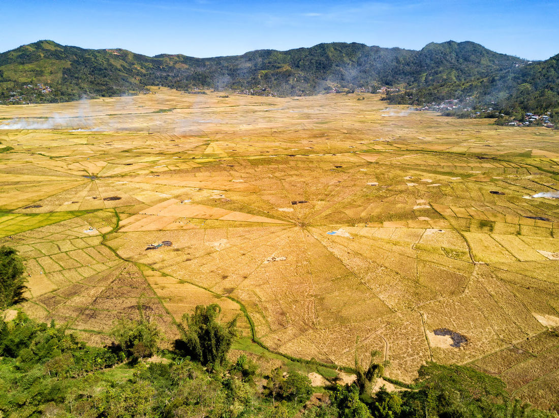 Aerial wide angle view of the spider rice fields at harvest time near Ruteng, Indonesia. DJI X Eyeem Agriculture DJI Mavic Pro Flores Island INDONESIA Rice Spider Tourist Travel Travel Photography Aerial Aerial Photography Aerial View Destination Dji East Nusa Tenggara Flores Harvest Landscape Rice Fields  Spider Rice Fields Tourism Tropical Vacation Yellow