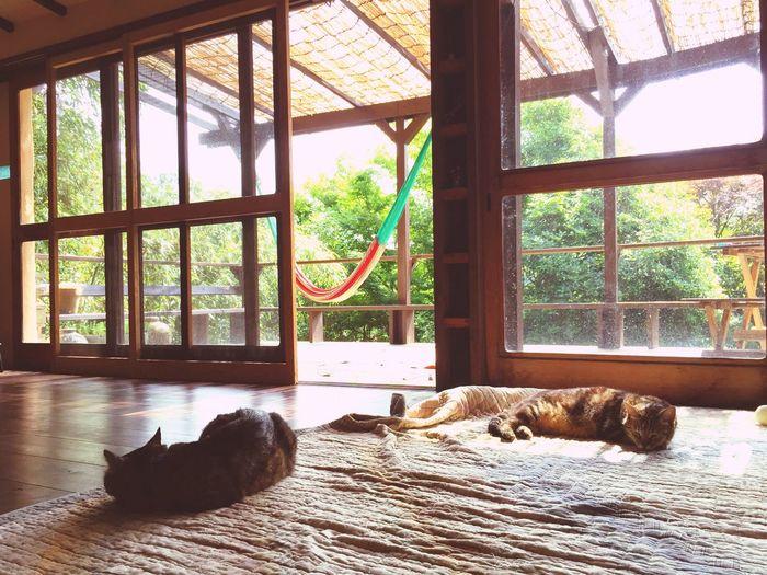 平和をありがとうね Relaxing Peace And Quiet Naturelovers InTheMorning Cats Room After The Rain