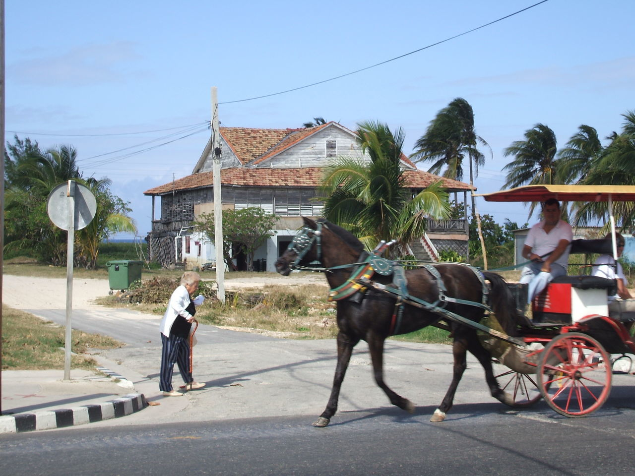 Fast-paced. Horse Horse Cart Horse-drawn Carriage Movement Neighborhood Map Old Person Old Person Walking With Cane Outdoors Palms Real People Veradero Veradero, Cuba