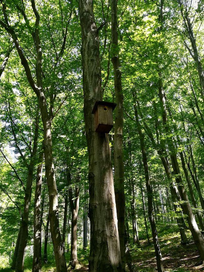 Wildlife & Nature Wood Birdfeeder Miskolc Bükk