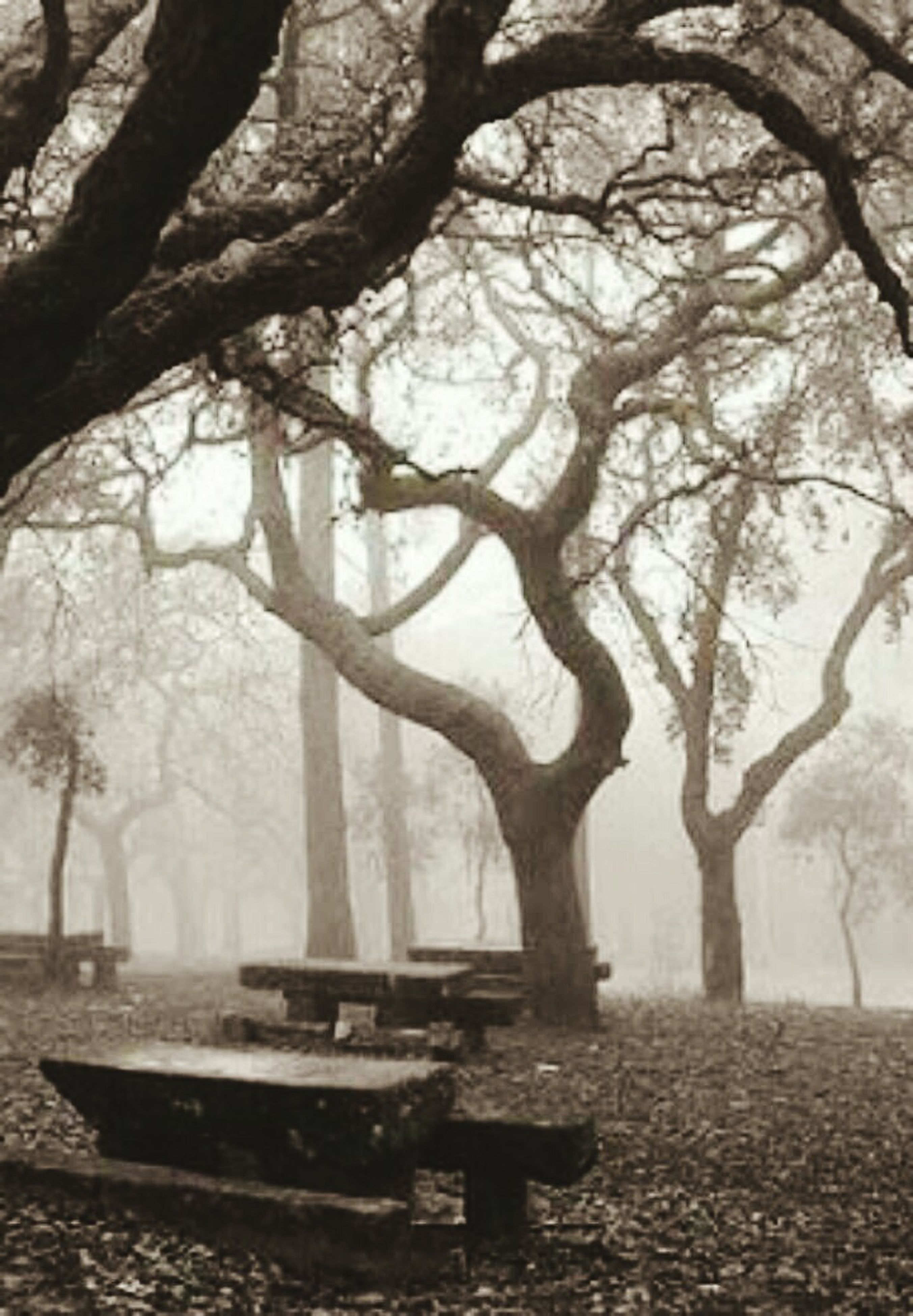 tree, branch, tree trunk, bare tree, tranquility, bench, park - man made space, nature, tranquil scene, empty, scenics, day, absence, wood - material, growth, park bench, outdoors, park, beauty in nature, no people
