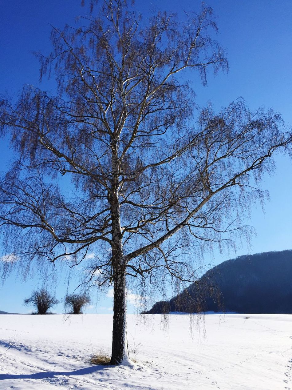 Winter tree in snow landscape Winter Snow Cold Temperature Tree Nature Bare Tree Beauty In Nature Outdoors No People One Tree Single Tree Tree In Snow Snow Landscape  Snowy Day Bright Sky Blue Sky Blue Sky And Trees Blue Sky And Snow