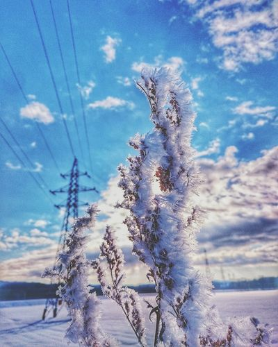 very cold❄ Nature Blue No People Sky Tree Beauty In Nature Close-up Outdoors Day Blue Sky Low Angle View Naturelandscapes Winter Snow Japan Hokkaido 北海道 自然 Nature Cold Temperature Cold Outside ❄⛄  Snowlandscape Winterlandscape Frozen Tree Very Cold Morning