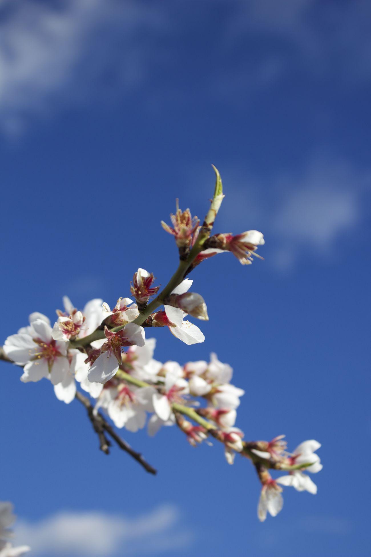 Spring Spring Flowers Flowerporn Sky