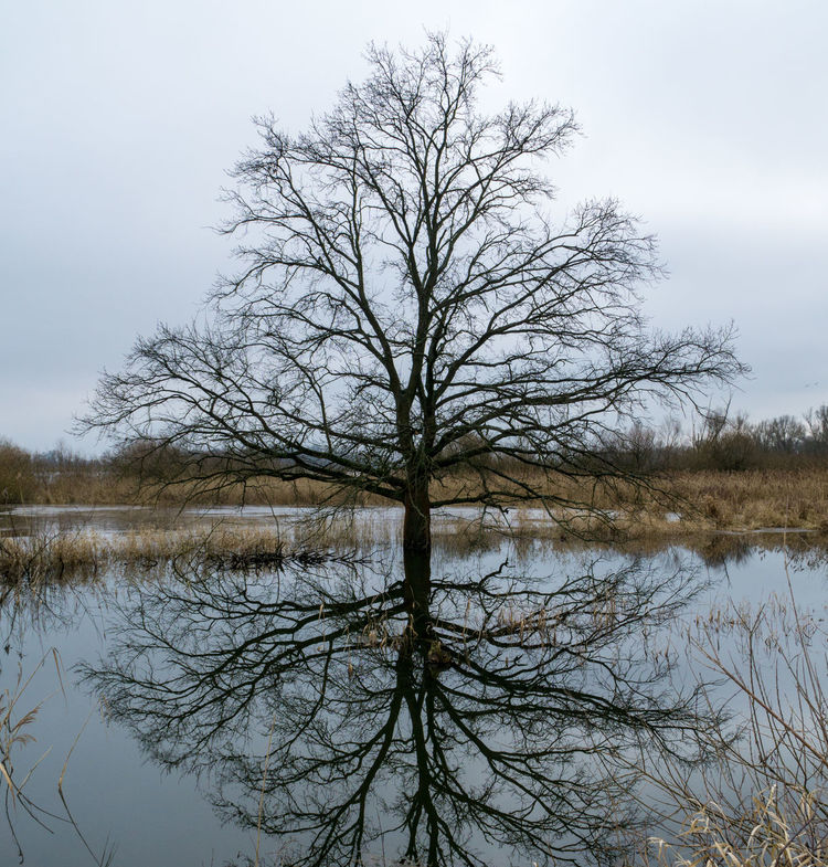 Landsscape photography in the area of Oderbruch in Germany. Bare Tree Beauty In Nature Branch Day Lake Landscape Nature No People Outdoors Reflection Sky Tranquil Scene Tranquility Tree Water