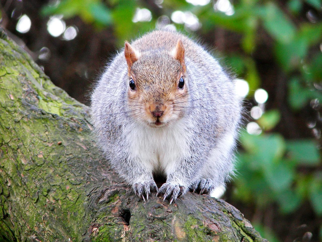 Beautiful stock photos of squirrel, Animal Themes, Animal Wildlife, Animals In The Wild, Close-Up