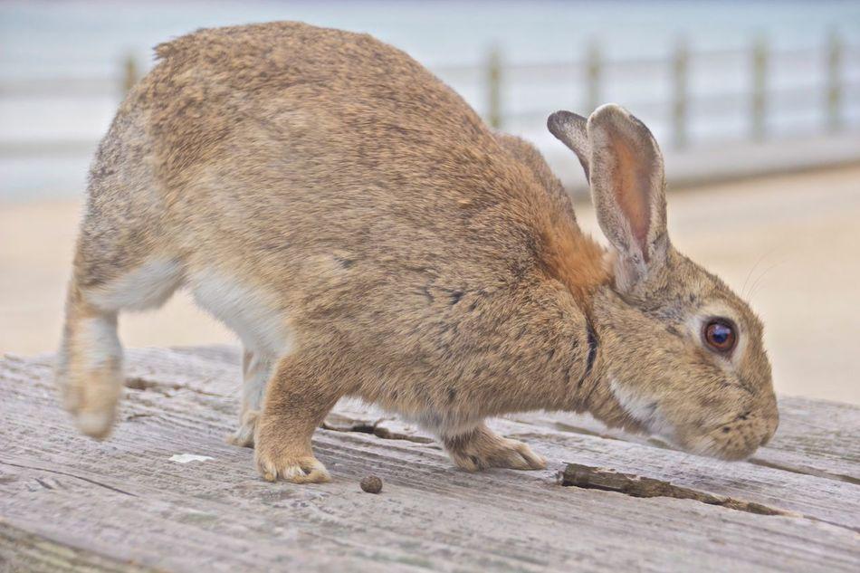 Beautiful stock photos of osterhasen, Animal Themes, Animal Wildlife, Animals In The Wild, Close-Up