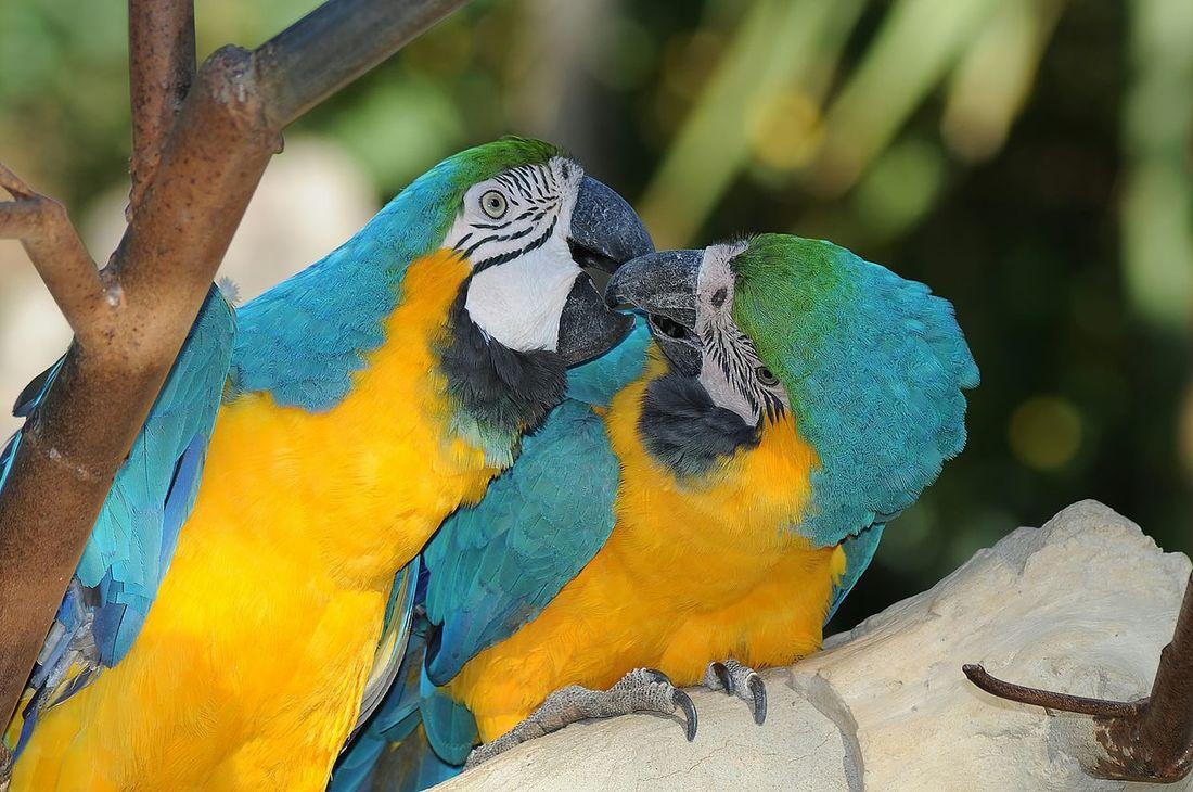 Peroquet Parrots Oiseaux Photos Around You Zoo De La Palmyre Bird Amoureux