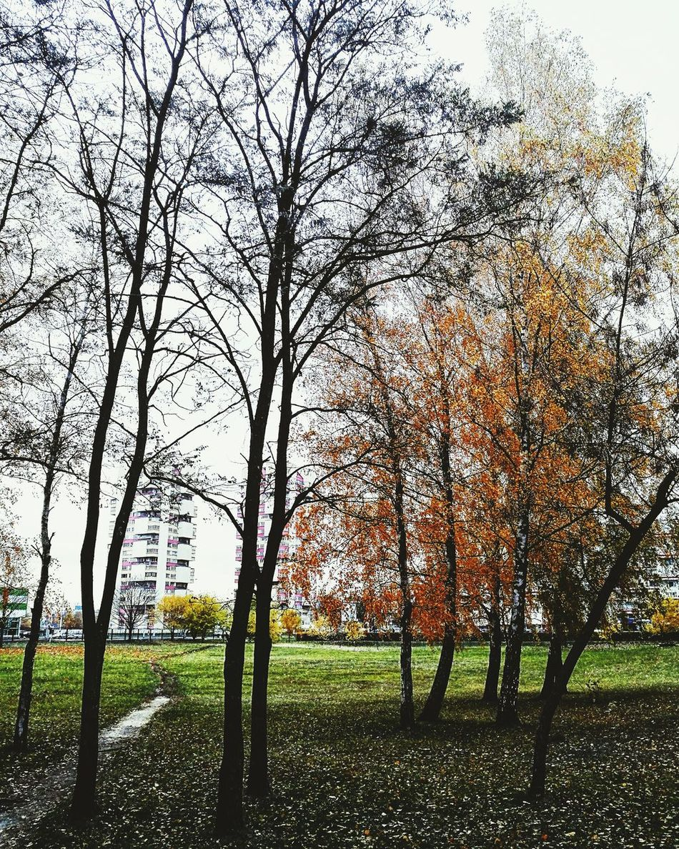 Autumn Tree Nature No People Beauty In Nature Sky Grass Brest City Yellowcolor Brest Brest2016 Brestgram