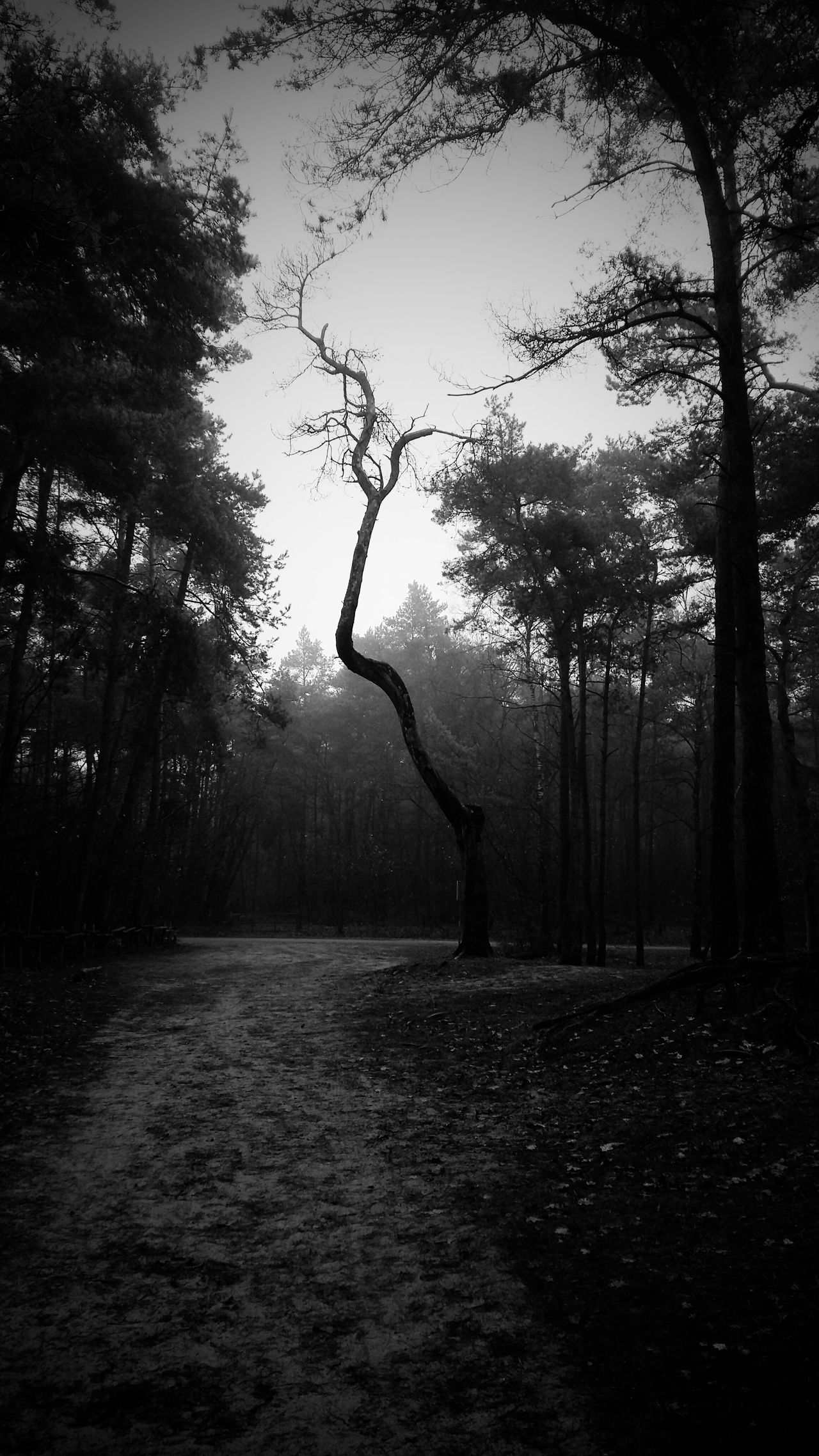 Tree Nature Sky Silhouette No People Outdoors Growth Tranquility Water Tranquil Scene Beauty In Nature Scenics Branch Day Animal Themes Blackandwhite Nature Landscape Tree Tranquility Growth Beauty In Nature Nature_collection Losser Zandbergen