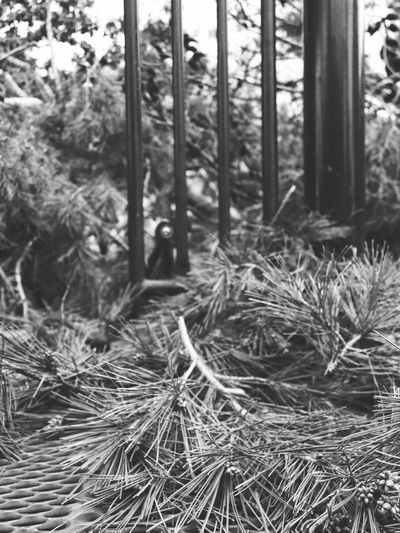 After the storm: uprooted tree Accidents And Disasters Black And White Branches California Close-up Day Dead Tree Disaster Fallen Tree Garvey Memorial Recreation Center Grass Growth Lines Nature No People Outdoors Pine Tree Plant Tree Tree Uprooted