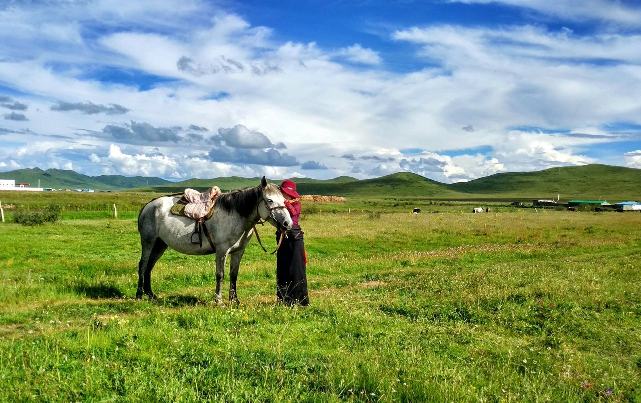 Horse Horse Riding Master Grass And Sky Grassland