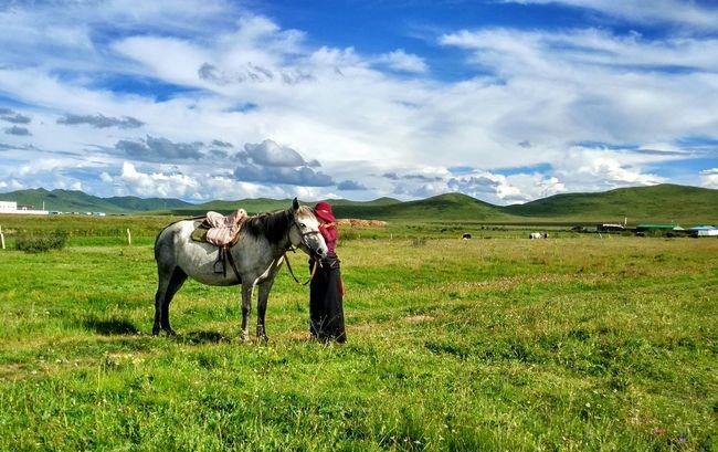 Horse Horse Riding Master Grass And Sky Grassland