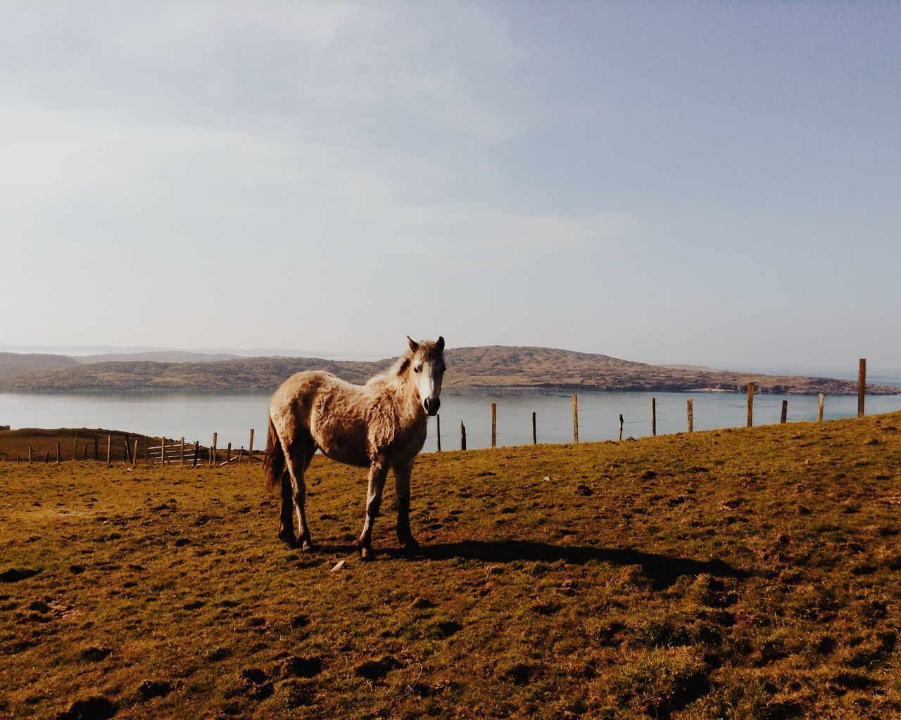 Beautiful stock photos of irland, Animal Themes, Beauty In Nature, Day, Domestic Animals