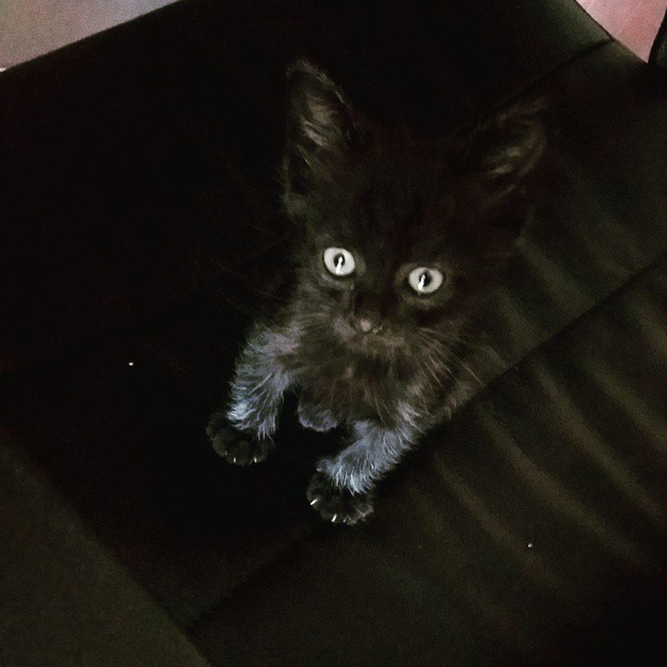 Lillo Mimetismofelino Perfetto Blackcats Babycat Instapic Instapicture Instapet Picoftheday 🐱🐱🐱
