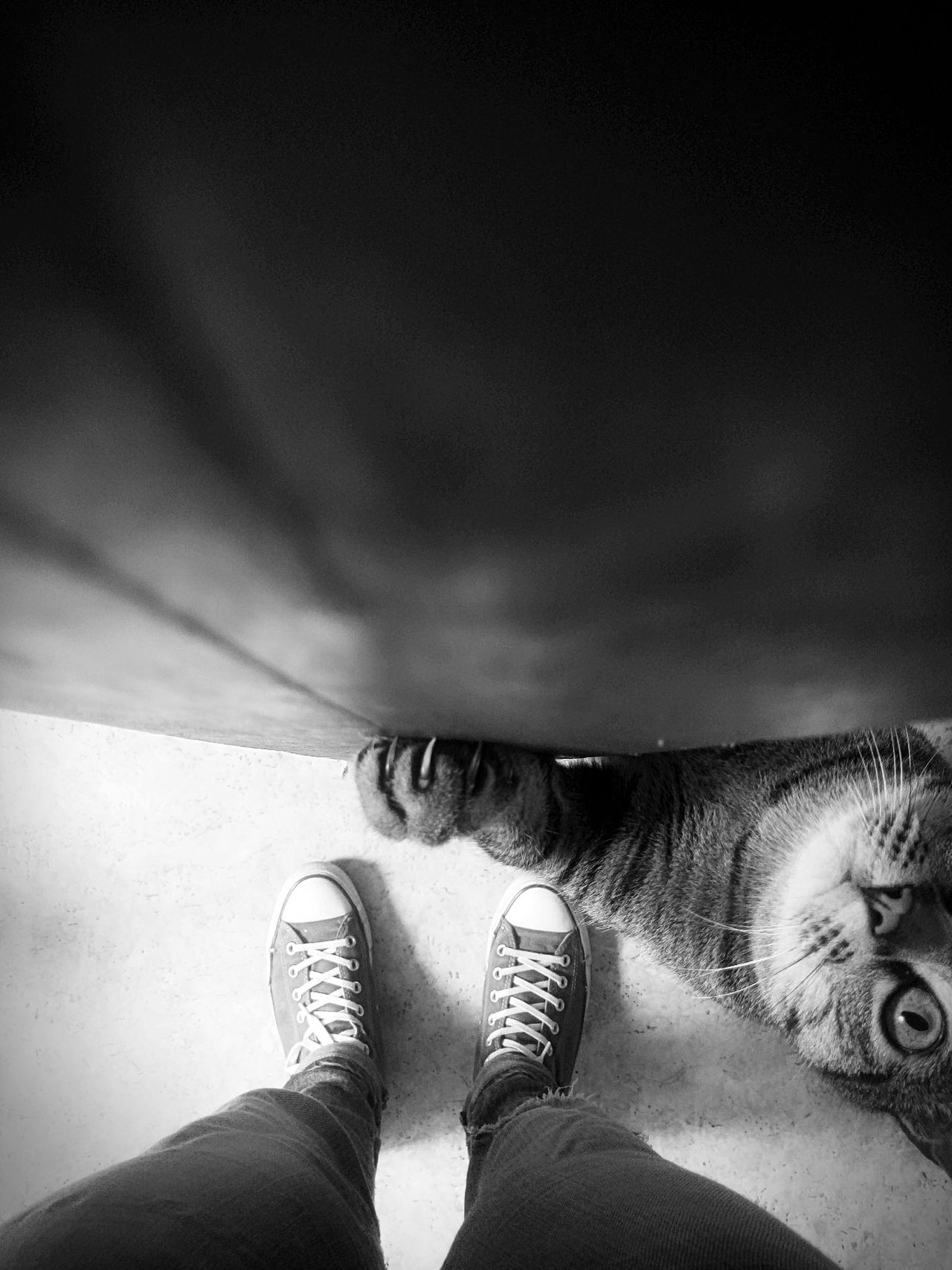 Human Leg Personal Perspective Human Body Part Indoors  Domestic Animals Animal Themes Light And Shadow Pets Mycat Sweet Moments Mypetisbetterthanyours Domestic Cat Cat♡ Mycat♥ Animal_collection Photography Black And White Blackandwhite