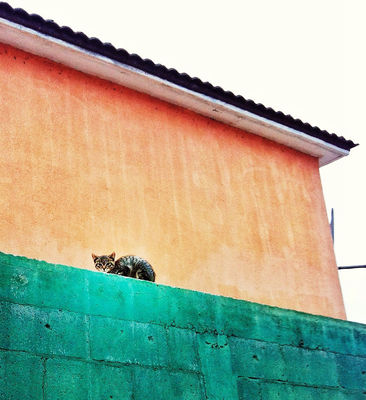 cat in Playas de Rosarito by lobobobo