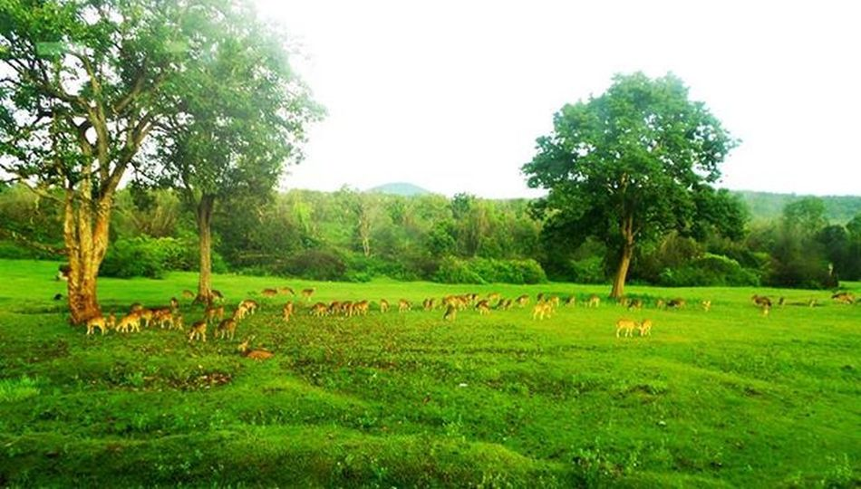 Through_my_lens .That heaven 💝 deer 😀 Photography Canon600D Instagraphy Happy Instalove Instaevening Picoftheday Nature Greenery Love Trip Mylens MyClick Happiness Deer Grass Trees Vastplace Tamilnadu