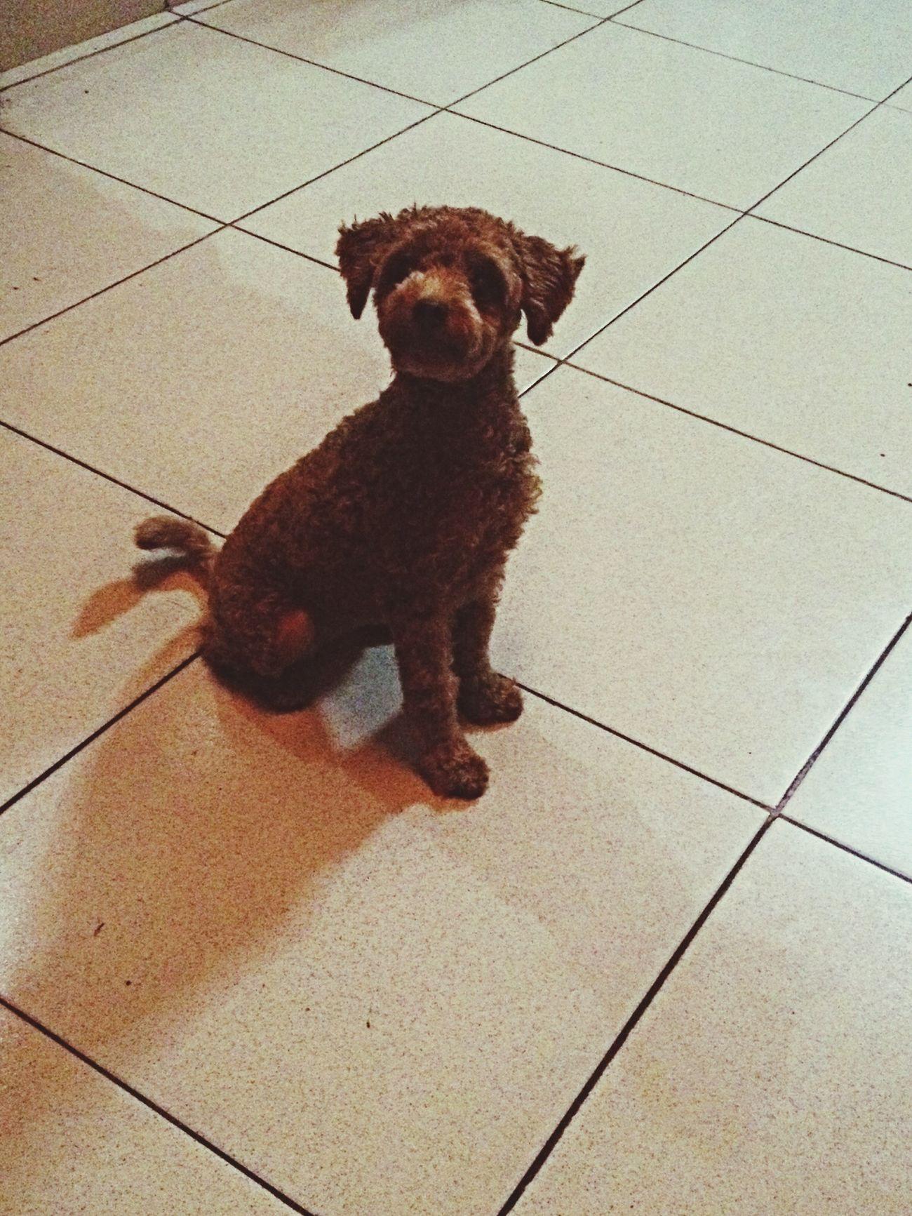 GUCCI Cute Pets Puppy
