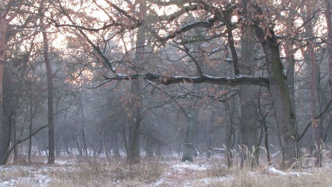Fog Trees Nature_collection