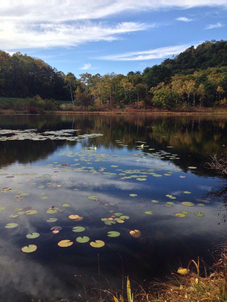 信州 長野県 志賀高原 一沼の紅葉🍁は 例年よりも 早く見頃になりました。 japan nagano prefecture shigakogen ichnuma shot in iPhone5 unprocessd poto せっかくの景色ですので無加工写真です。autumn leaves🍁 Autumn Fall Beauty Plateau Lake Japan Nature Photography EyeEm Nature Lover Colors Of Autumn EyeEm Best Shots - Nature Amazing View 山ノ内町