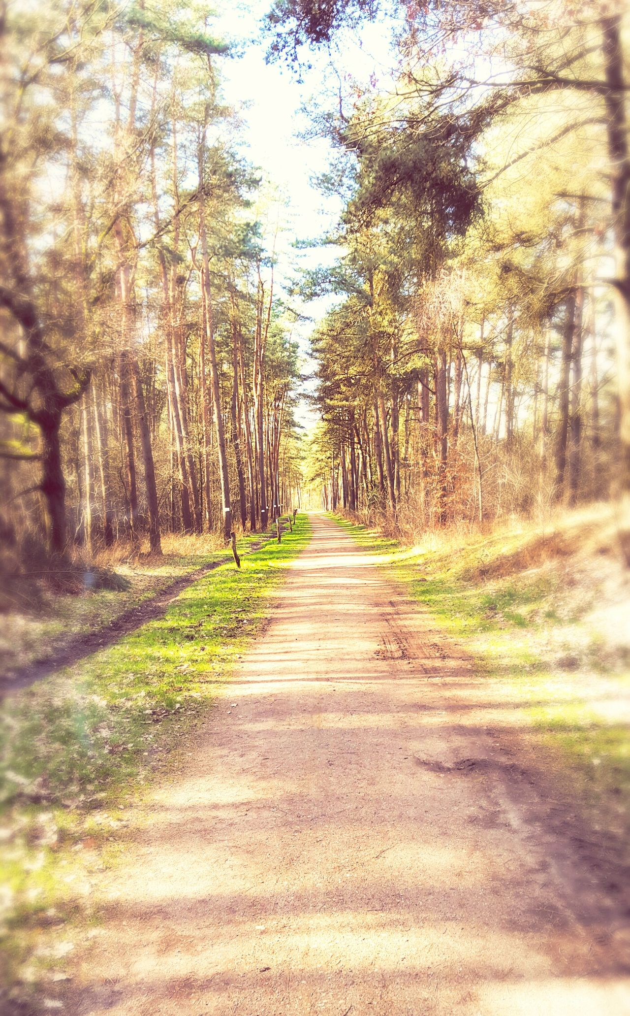 Wald Himmel Backgrounds Walking Around Nature Close-up No People Outdoors Beauty In Nature Day Licht Und Schatten Frühling Waldspaziergang Sonne Sunlight Sun Life Tree EyeEmNewHere Emotion Colours Sky