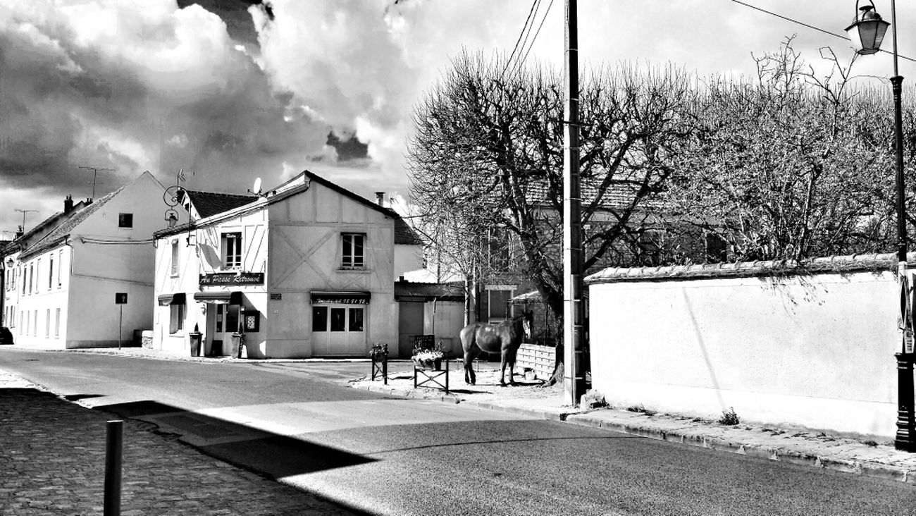 A horse in the city French street life 2014 Monochrome Bw_collection Blackandwhite Black And White