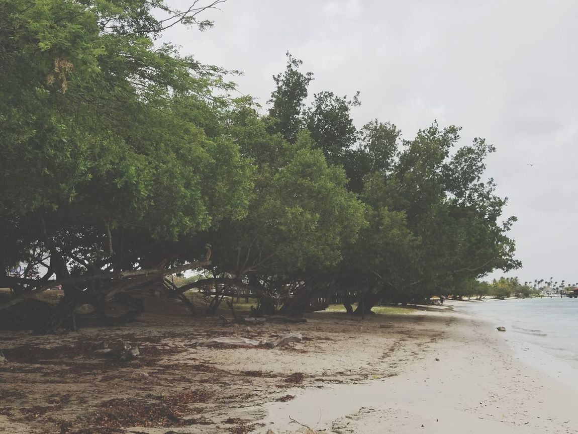 Tree Beach Nature Growth Sand Sky Day Water Outdoors Tranquility No People Beauty In Nature Sea Rural Scene Aruba Vacation 2017 Beauty In Nature Travel Destinations Scenics Aruba One Happy Island Nature Photography Lost In The Landscape