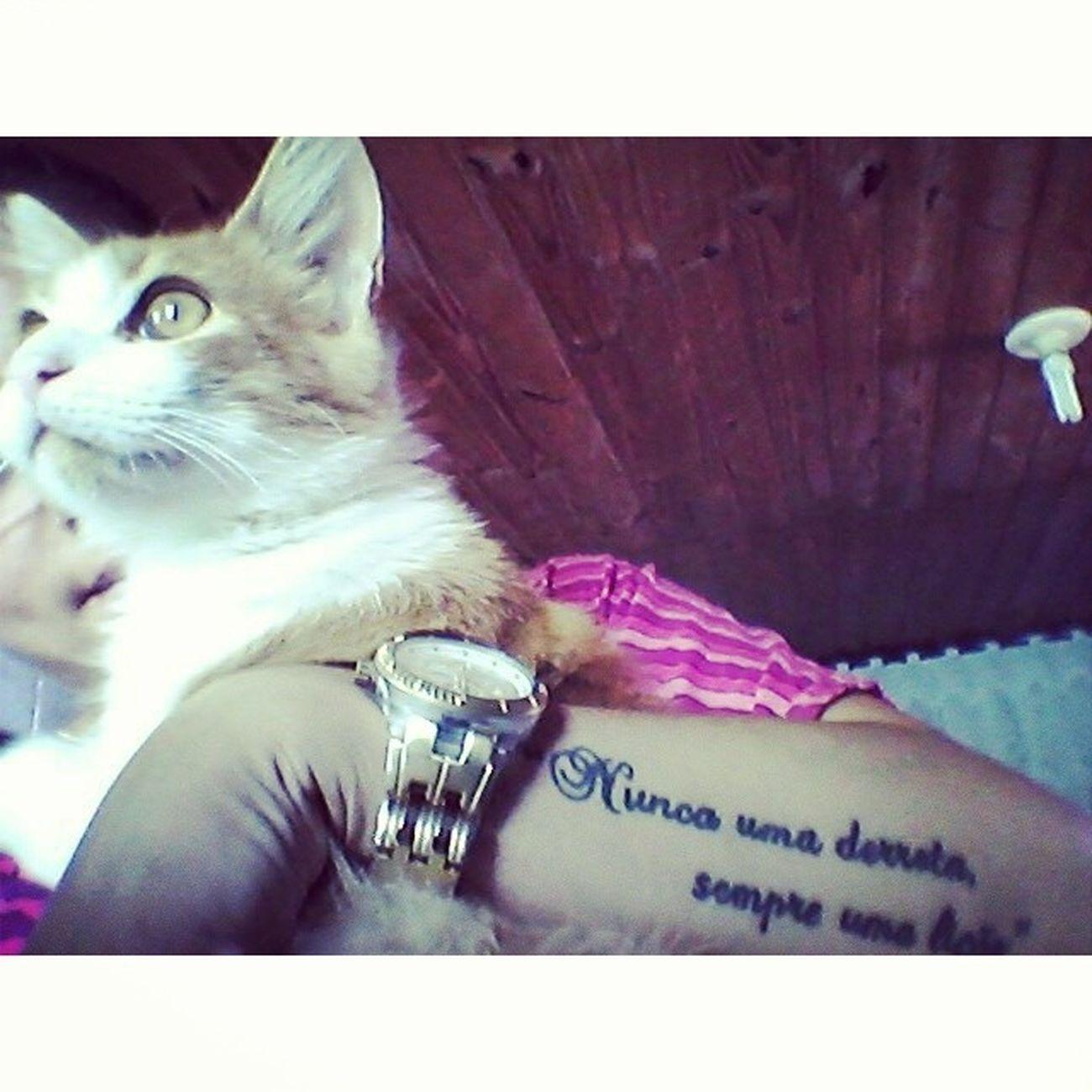 Oiiii Tön Zuiudinho Adoro Cat lovecat
