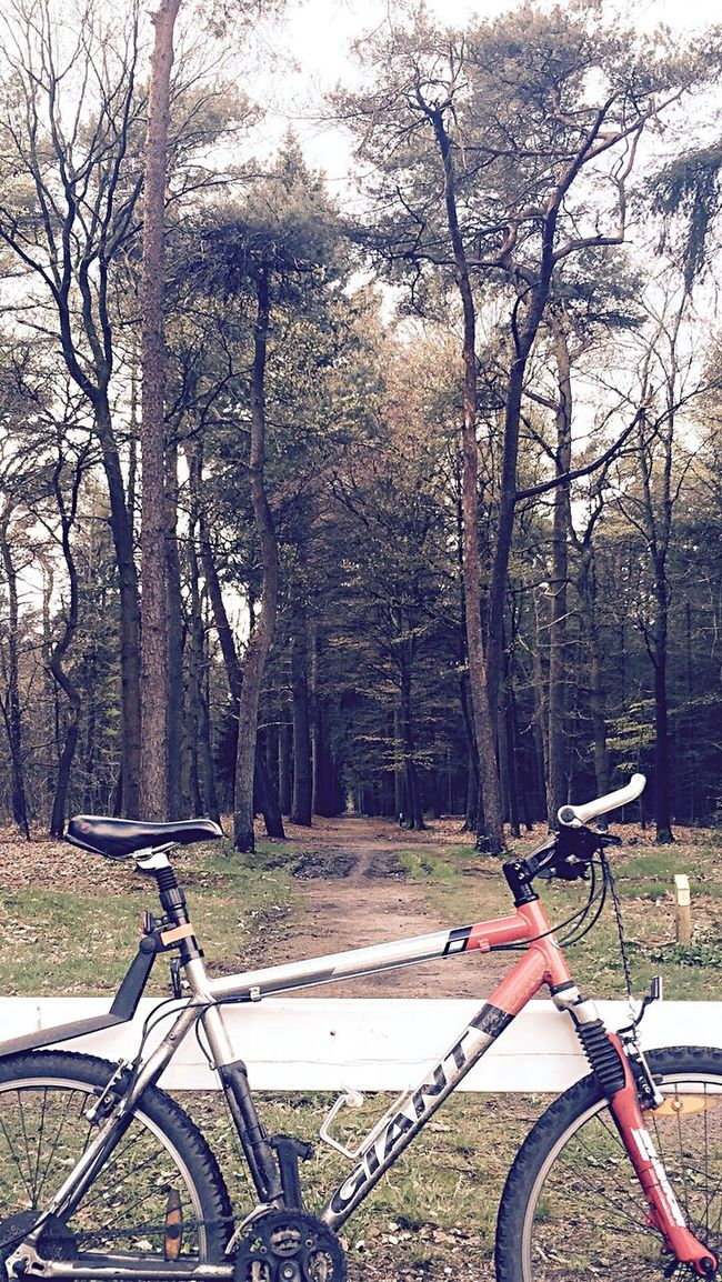 Bike Mountainbike Forrest Forrest Photography Trees Taking Photos Perspective Beauty In Nature Vanishing Point Nature_collection Naturephotography Trees And Sky Nature Photography Eyemphotography EE Love Connection! Eye4photography  EyeEm Best Shots Outdoors Alternative Fitness