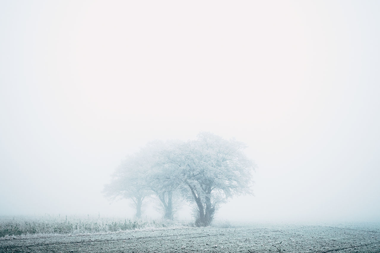 mostly white Beauty In Nature Cold Temperature Day Fog Landscape Nature No People Outdoors Single Tree Snow Snowing Tree Winter My Year My View Fresh On Market 2016