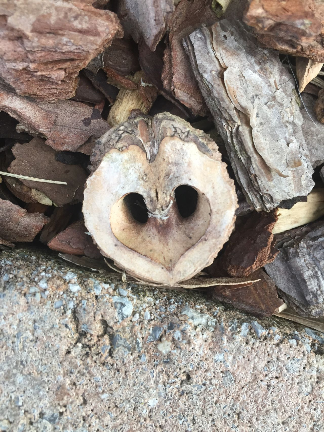 Love of nature Close-up heart Shape Nature front yard Mulch bark chips Outdoors Nut beauty Love