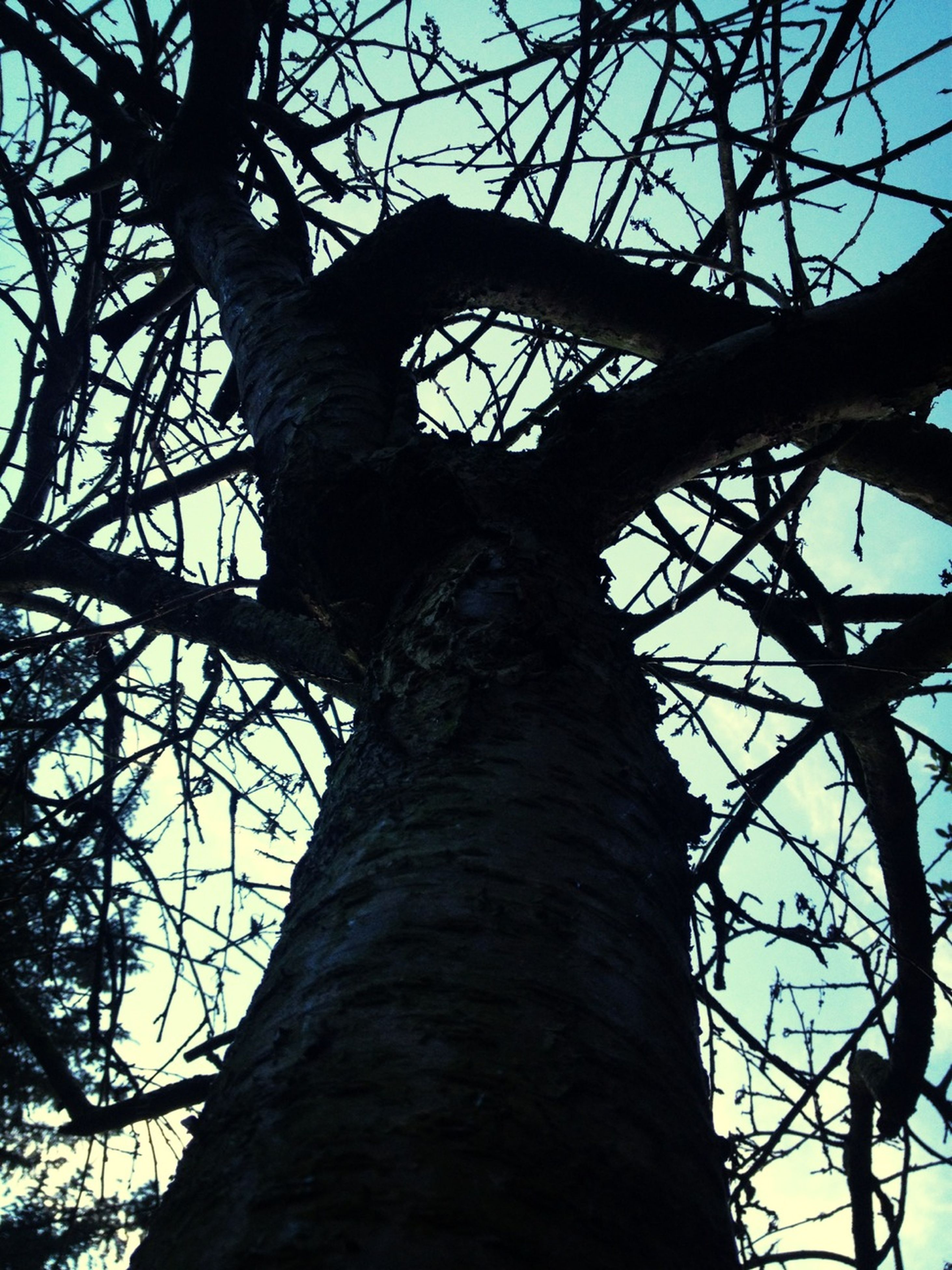 low angle view, tree, branch, bare tree, tree trunk, sky, nature, silhouette, outdoors, no people, day, tranquility, clear sky, textured, wood - material, bark, close-up, growth, large, sunlight