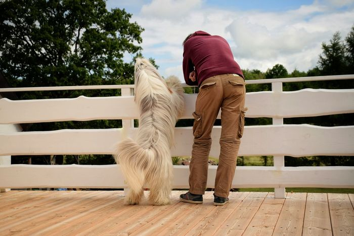 Beardedcollie Casual Clothing Cloud Cloud - Sky Daddy Day Dog Doglover Doglovers Dogs Of EyeEm Dogslife Dogstargram Full Length Furry Friends Leisure Activity Life Is Beautiful Lifestyles Love My Dog  Mammal Outdoors Pet Sky Together Tree Watching