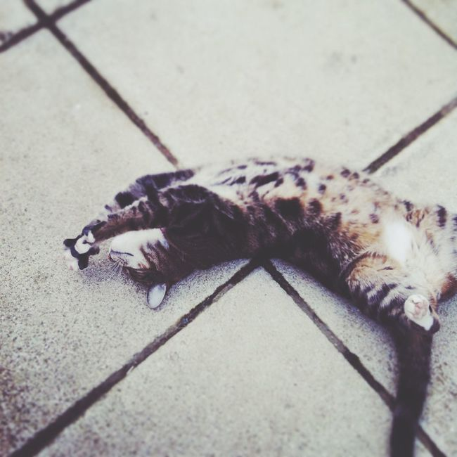 Relaxing Cat Cute Hello World