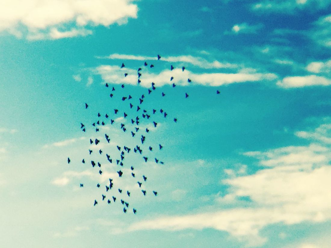 Sky Flying Bird Low Angle View Flock Of Birds Animal Themes Mid-air ❤ Wow_pics #picoftheday #photooftheday #fotodeldia #ig_masterpiece #clubsocial #statigram #catalunyafotos #ig #igers #freaksbcn #barcelona #catalunya #bcn #irbarcelona #mytravelgram #pics_united #gang_family #igersbarcelona #igerscatalonia #gf_daily #desco Large Group Of Animals Cloud - Sky Migrating No People Celebration Day Outdoors Nature Togetherness Animals In The Wild Motion Beauty In Nature Teamwork