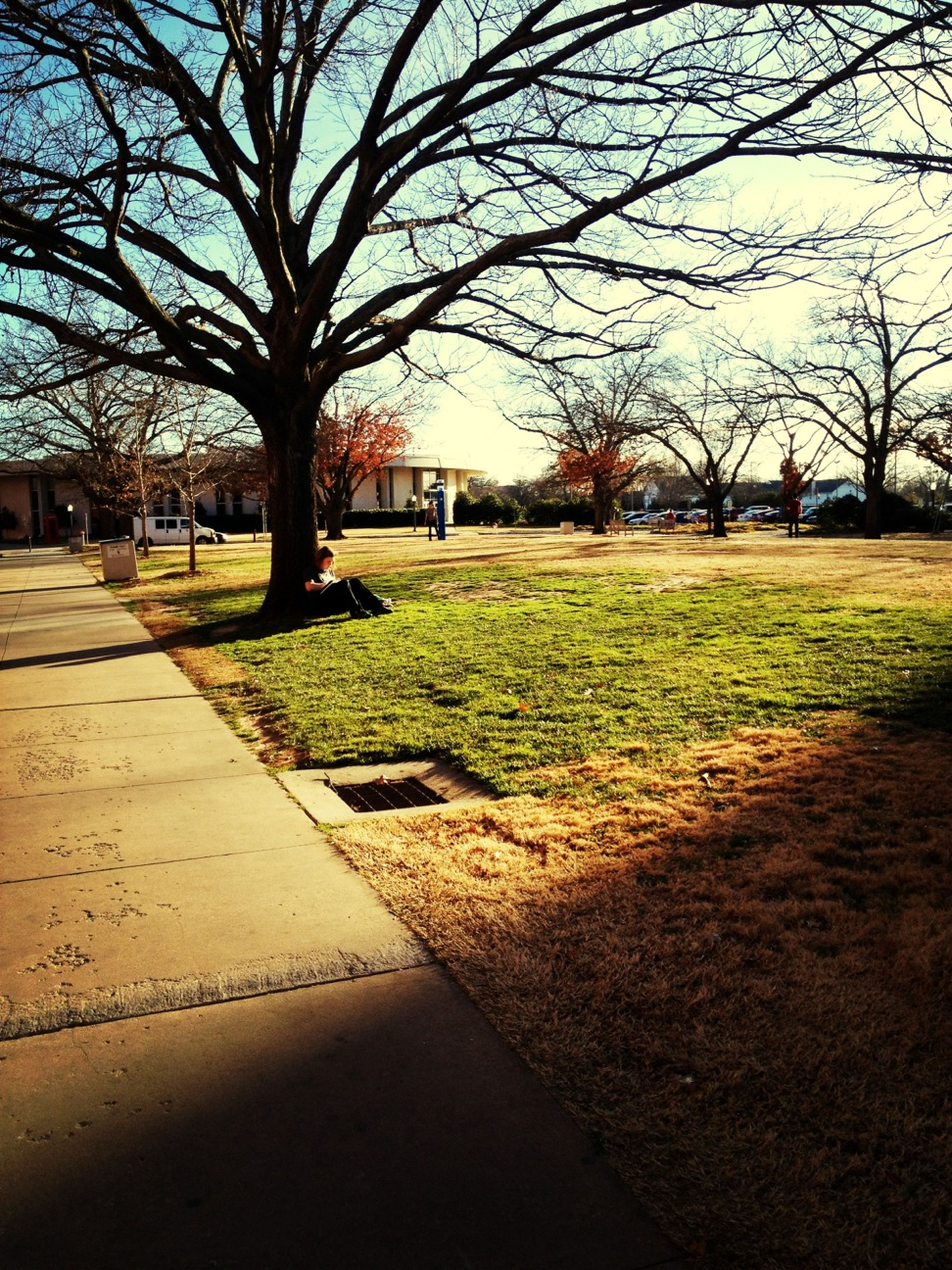 tree, bare tree, grass, park - man made space, building exterior, shadow, footpath, branch, park, lawn, built structure, architecture, sky, incidental people, street, sunlight, walkway, road, day, city