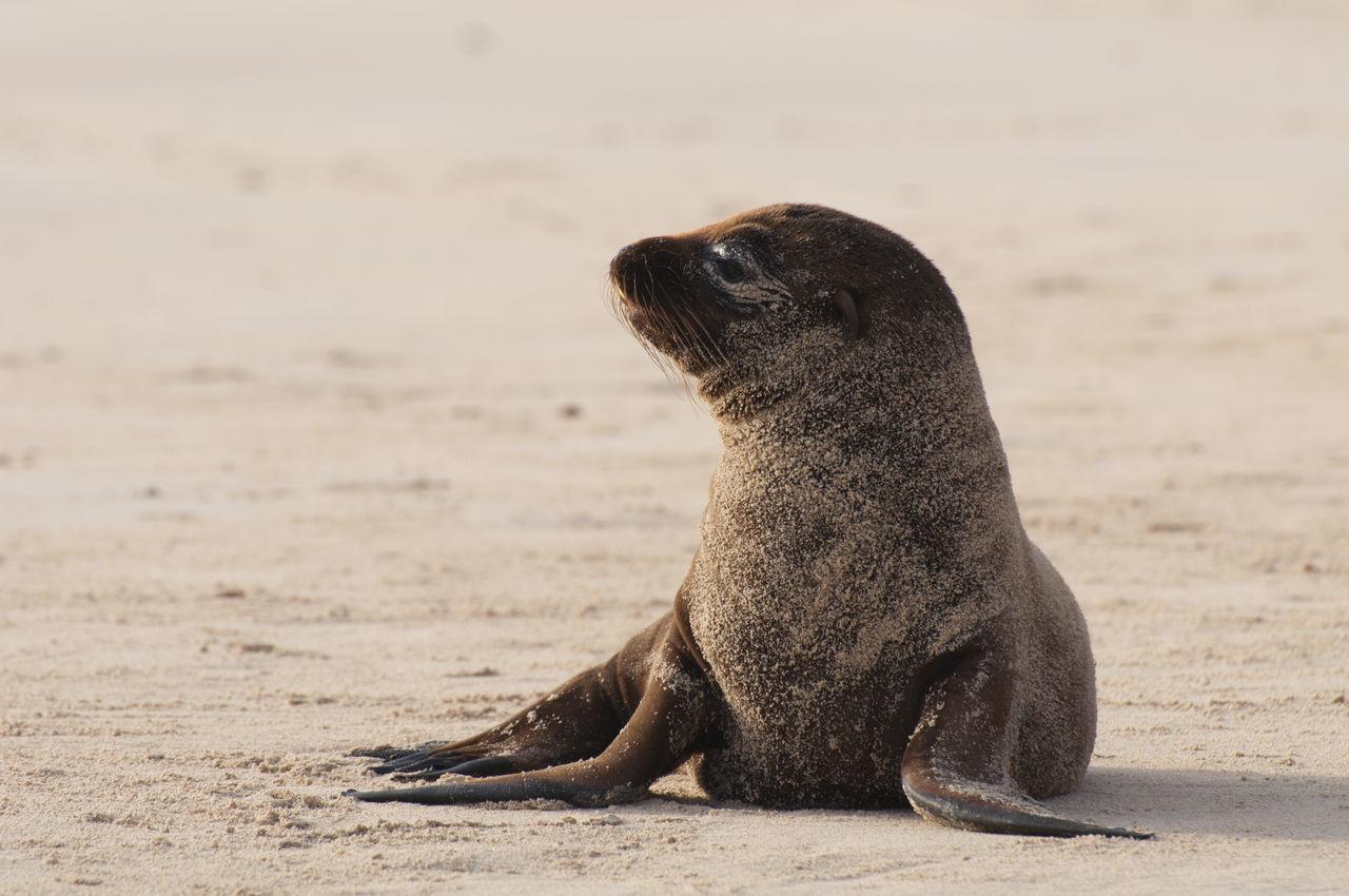 Beautiful stock photos of löwe, Animal Themes, Animal Wildlife, Animals In The Wild, Beach