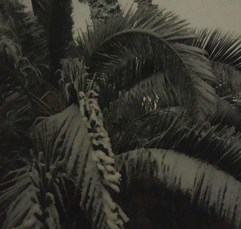 Snow Palm Trees Winter Beautiful Hanging Out Hello World Enjoying Life Taking Photos Dark Outside Freezing White