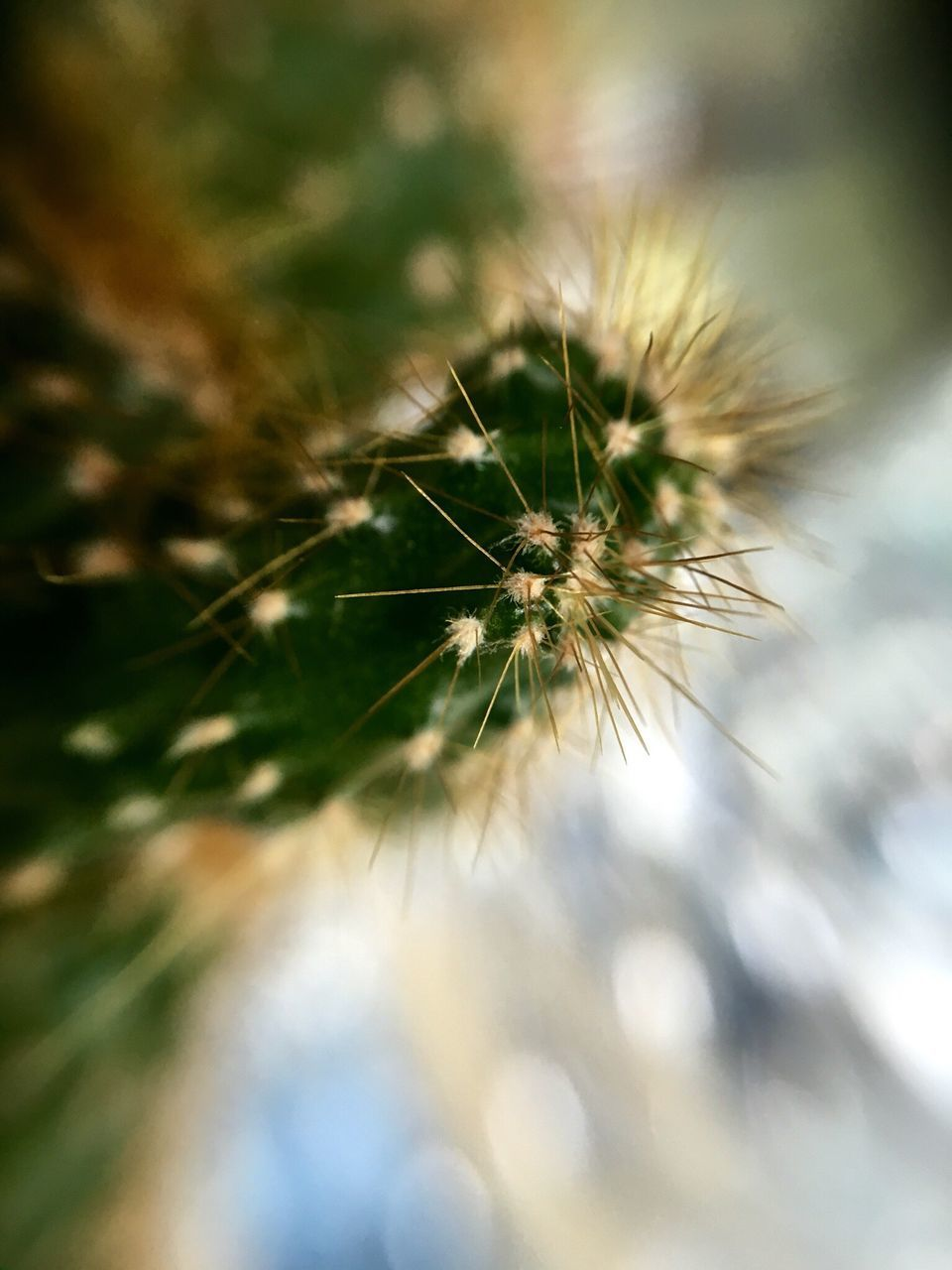 close-up, nature, selective focus, no people, growth, outdoors, day, animal themes