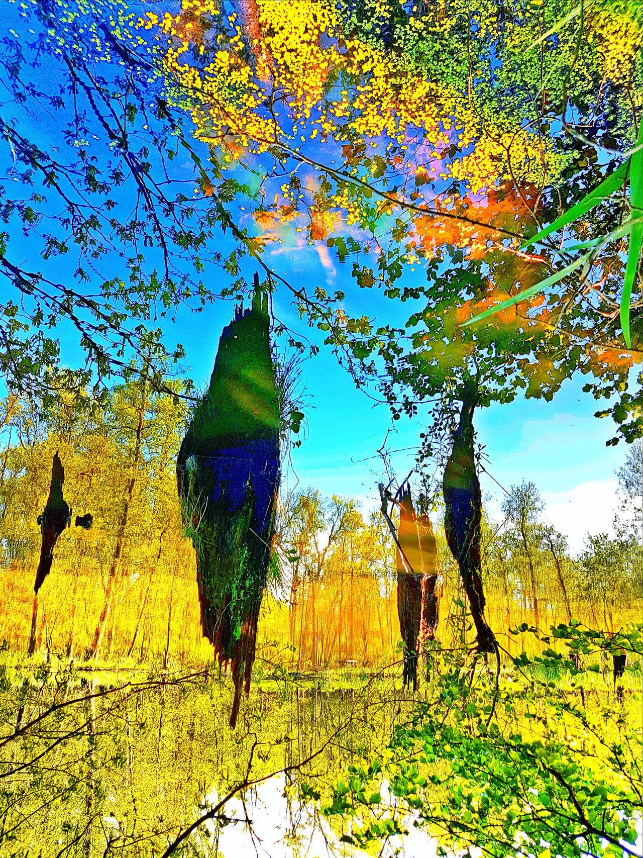 Traumtänzer Beauty In Nature No People Outdoors Sky Tree Nature Growth Multi Colored Smartphone Photography Abstract EyeEmNewHere Dream Surreal