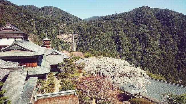 何処で撮ったっけ Japan Temple Forest Five-storied Pagoda Sakura