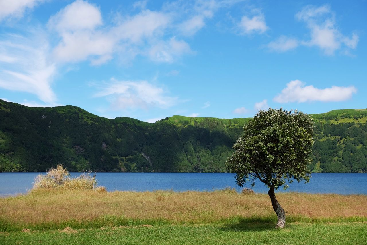 Tree Nature Beauty In Nature Scenics Growth Tranquility Tranquil Scene Water Idyllic Sky Outdoors No People Green Color Sea Landscape Cloud - Sky Day Grass Mountain Beach Lines Miles Away in Lagoa Das Sete Cidades , Azores Portugal MISSIONS: The Great Outdoors - 2017 EyeEm Awards