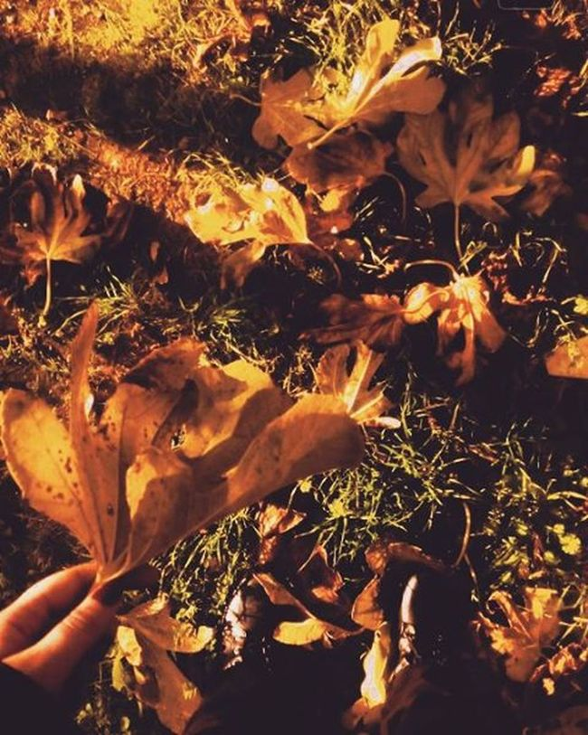 Wednesday.🍁🍂{December 9th} αθηνούλα ίλιον πάρκοτρίτση Autumnmood Leaves Wednesdaymood Photooftheday MyPhotography Vintage Vintagephotography Countingdaysforchristmas Loading Loveisintheair Findthelove Breath VSCO Vscocam Vscolove Vscomood Vscogreece Vscoathens Vscoautumn Vscovintage Instagreece Instamood instalove instapic instachristmas instaphotography