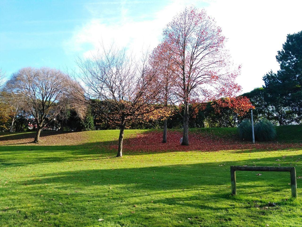 Nature Autumn Park Trees Autumn Colors Autumn Leaves Autumn🍁🍁🍁 Gijón