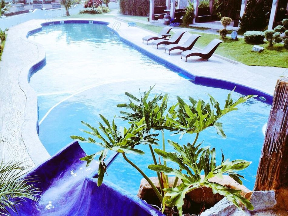 Yesterday's playground @torres farm, cavite 👍🏽 Swimming Pool Water High Angle View Palm Tree Nature Outdoors Day No People Tree Clear Sky WorkWithPleasure Followme Follow Me On EyeEm