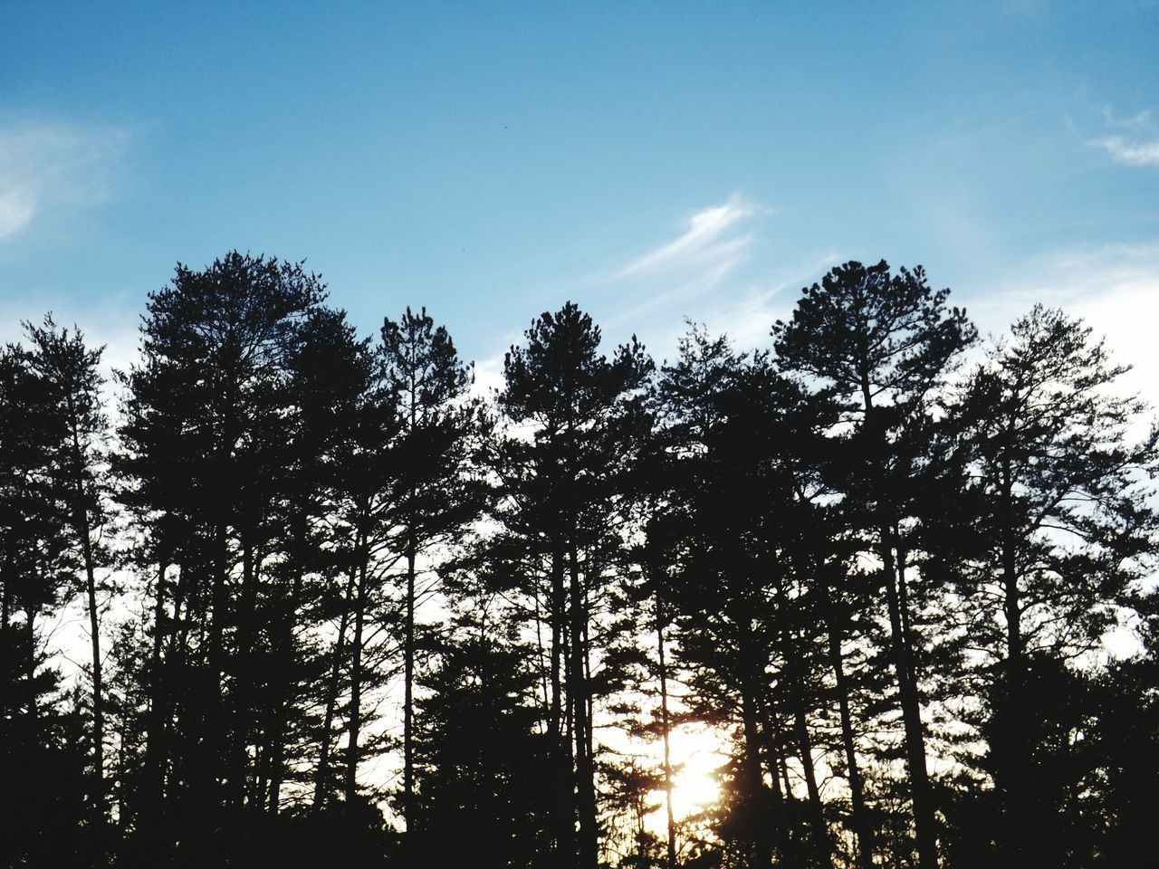 tree, forest, nature, low angle view, sky, beauty in nature, growth, tranquility, scenics, no people, day, silhouette, outdoors, tranquil scene, landscape, tree area